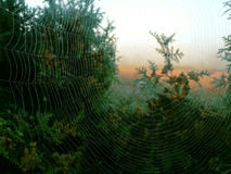 The art of spiders Royalty Free Stock Photo