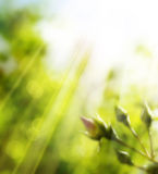Art spring background Stock Image
