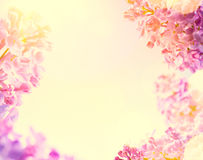 Art Spring  background with fresh spring flowers Stock Photos