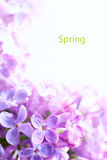 Art Spring  Beautiful lilac Flowers Border background Royalty Free Stock Photo
