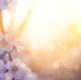 Art Spring blomningbakgrund Arkivfoton