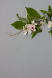 Art Spring Blooming-de lentebloemen op grijze achtergrond Royalty-vrije Stock Foto's