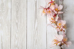 Art Spring Blooming spring flowers on wooden background. Spring border background with pink blossom. copy space Royalty Free Stock Photography