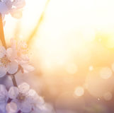 Art Spring blossom background Stock Photos