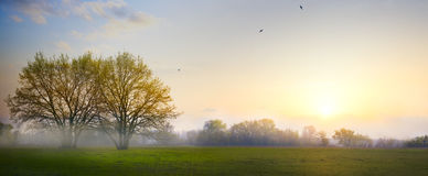 Art Spring countryside landscape; morning farmland field and blo Royalty Free Stock Photo