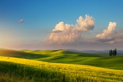 Art spring farmland and country road; tuscany countryside rolling hills royalty free stock images