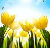 Art spring floral background; fresh tulip flower on blue sky bac Royalty Free Stock Images