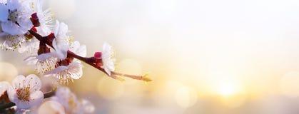 Art Spring flower background; Easter landscape Royalty Free Stock Photography