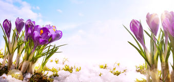 Art spring flower  background Stock Photos
