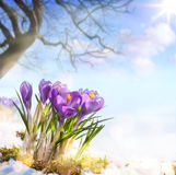 Art spring flowers Stock Images