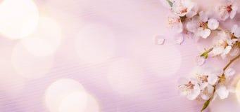 Art Spring gränsbakgrund med rosa färgblomningen arkivbilder