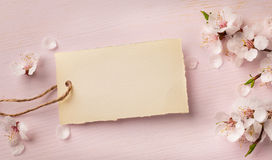 Art Spring gränsbakgrund med rosa färgblomningen Royaltyfria Foton