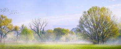 Art Spring landskap; Påskbakgrund med blommande vårtre arkivfoto