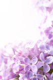 Art Spring lilac abstract background Stock Images