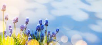Art Spring och easter bakgrund med vårblommor Royaltyfria Foton