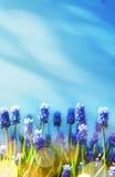 Art Spring och easter bakgrund med vårblommor Royaltyfri Bild