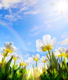 Art Spring tulip flower on blue sky background; Happy Easter Day Stock Photography