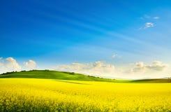 Free Art Springtime Rural Landscape. Rape Spring Field And Blue Sky Horizon Stock Photos - 217805823