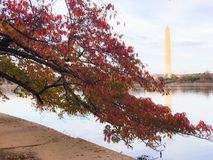 Washington monument. Art story prohibit show performing cool love building reflections bus cold night beautiful great Kennedy center tidal basin red leaves Royalty Free Stock Photography