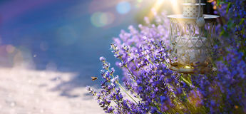 Art Summer beautiful garden with lavender flowers Royalty Free Stock Photos