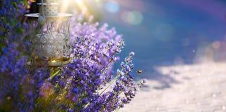 Art Summer beautiful garden Stock Image