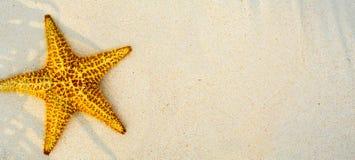 Art Summer tropical beach background Stock Photos