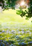 Art Sunlight en el bosque verde de pascua, tiempo de primavera Imágenes de archivo libres de regalías