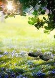 Art Sunlight en el bosque verde de pascua, tiempo de primavera imagen de archivo libre de regalías
