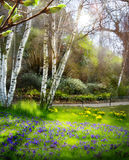 Art Sunlight in the green forest, spring time Stock Photography