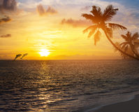 Art sunrise over the tropical beach. Art Beautiful sunrise over the tropical beach Royalty Free Stock Photography