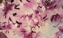 Art texturisé de bouganvillée rose et noire Photographie stock libre de droits