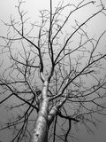 Art Tree Photos libres de droits