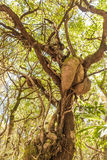 Art on tree Royalty Free Stock Photo