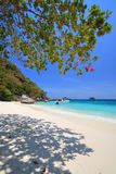 Art Trees at Similan Islands Stock Image