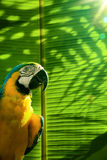 Art Tropical parrot on palm tree Royalty Free Stock Photo