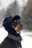 Art und Weisehund Stockfoto