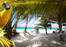 Art Vacation sur le paradis des Caraïbes images stock