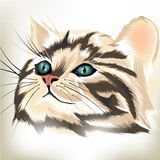 Art vector  portrait of cute striped cat with big blue eyes Royalty Free Stock Photography