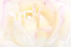 Art vintage background rose flower watercolor vector illustration
