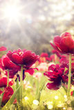 Art wild flowers covered with dew in the sunlight Royalty Free Stock Photography
