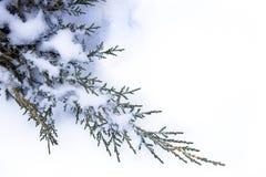 Art Winter background Stock Image