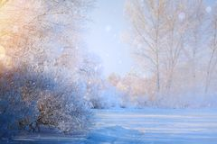 Art winter Landscape with Frozen lake and snowy trees. Winter Landscape with Frozen lake and snowy trees royalty free stock images