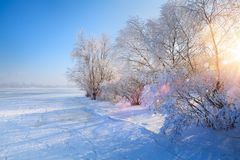 Free Art Winter Landscape With Frozen Lake And Snowy Trees Stock Photos - 127040063