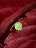 Art. Wood Bug. Royalty Free Stock Photos