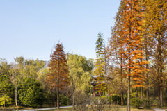 The art world of Red Mansions autumn scenery Stock Photo