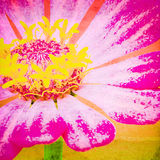 Art Of Zinnia. Art Work Of Pink Zinnia Flower Close Up Painting Style,Mixed Media Stock Image