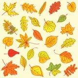 Artículos de las hojas de otoño del dibujo a pulso en una hoja del libro de ejercicio Fotos de archivo libres de regalías