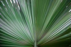 Arte abstracto de la hoja de la planta verde Imagenes de archivo