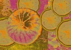 Arte abstracto de la sandía imagen de archivo