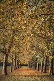 Arte abstrato convergente das árvores do outono fotografia de stock